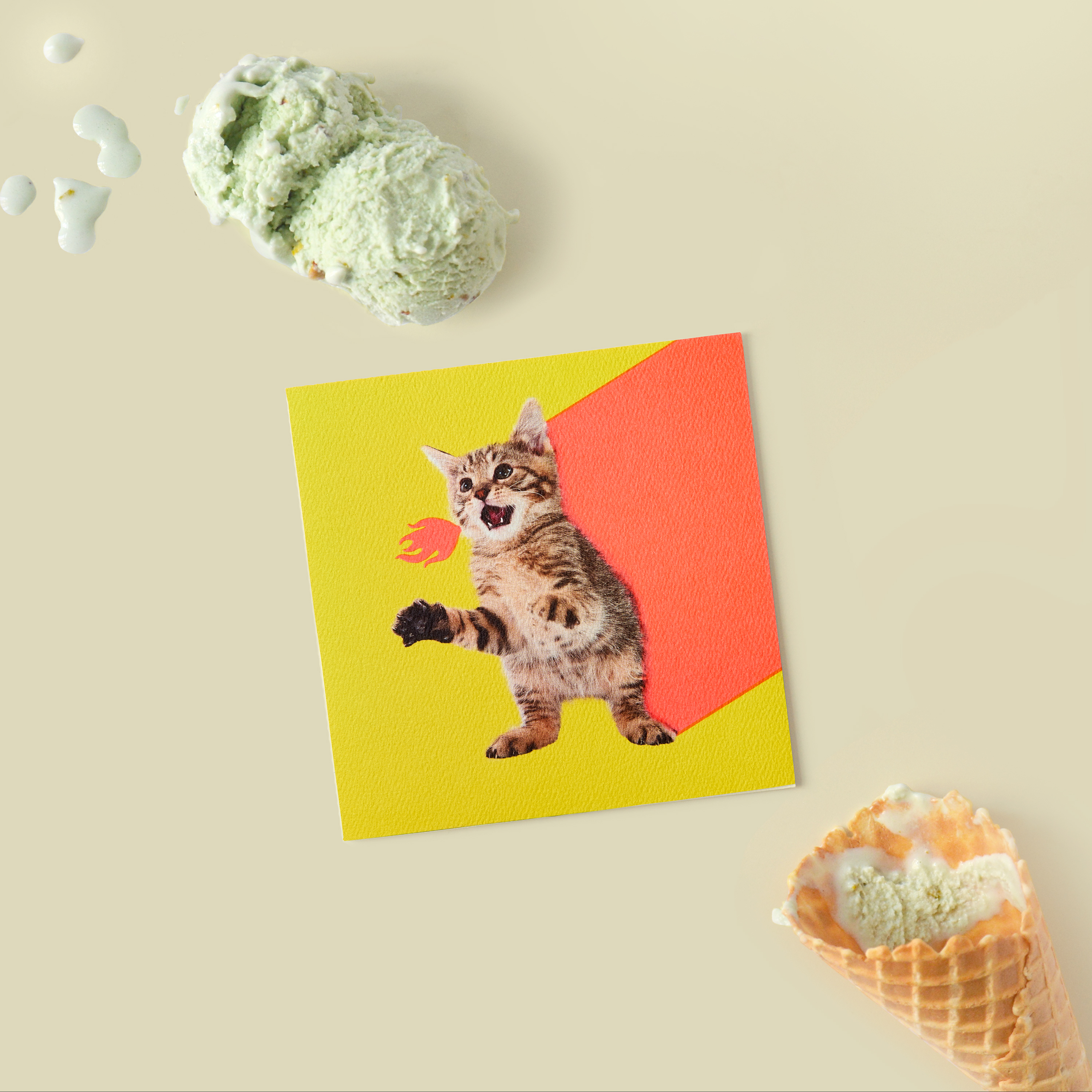 Kitten Blank Card - Birthday, Friendship, Thinking of You image