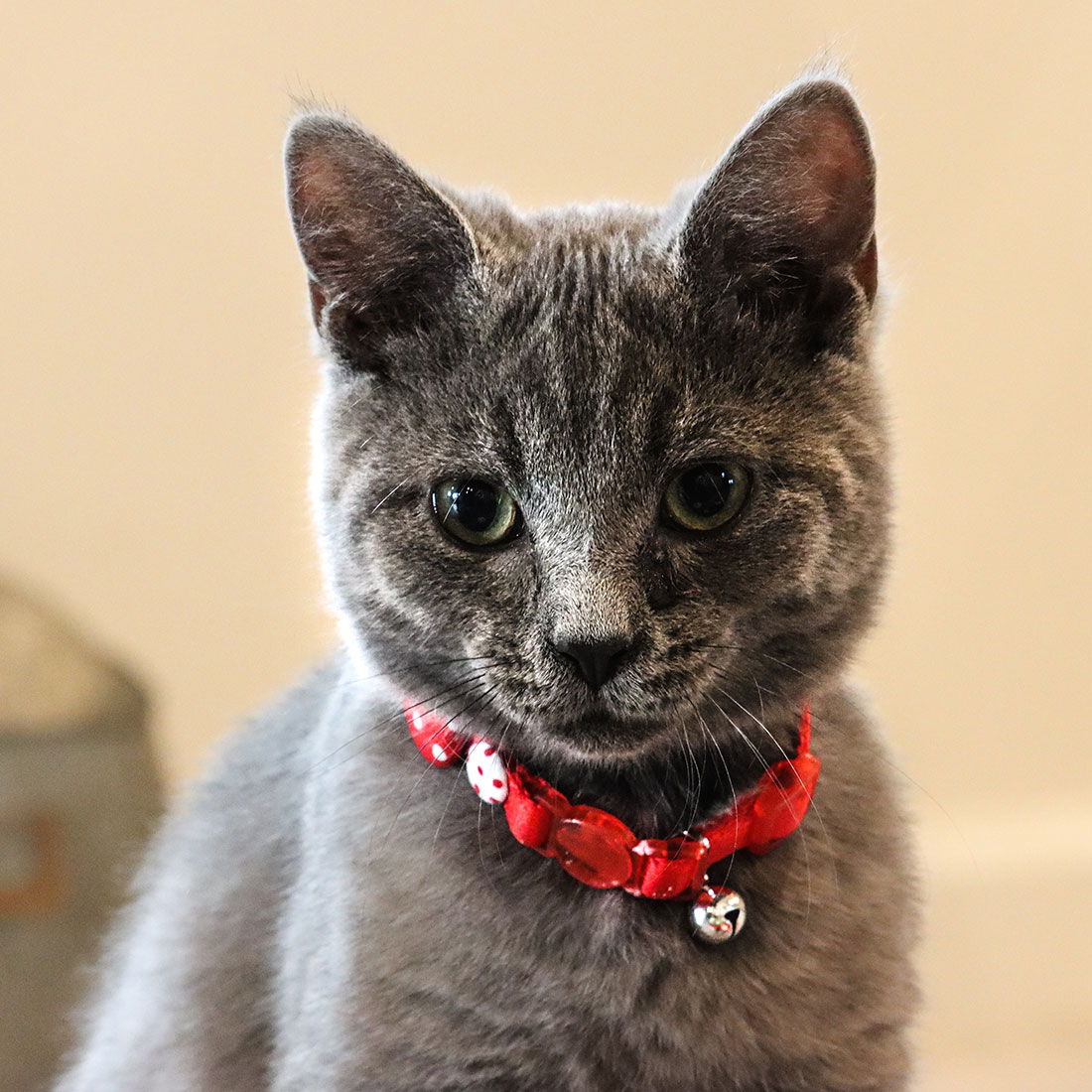 kitten_buttons.jpg
