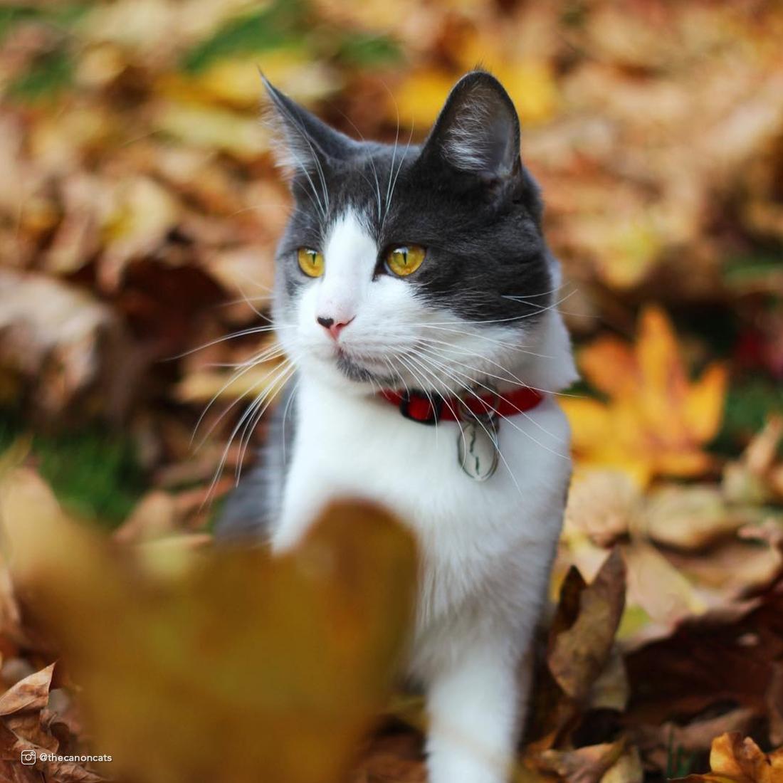soy_cat.jpg