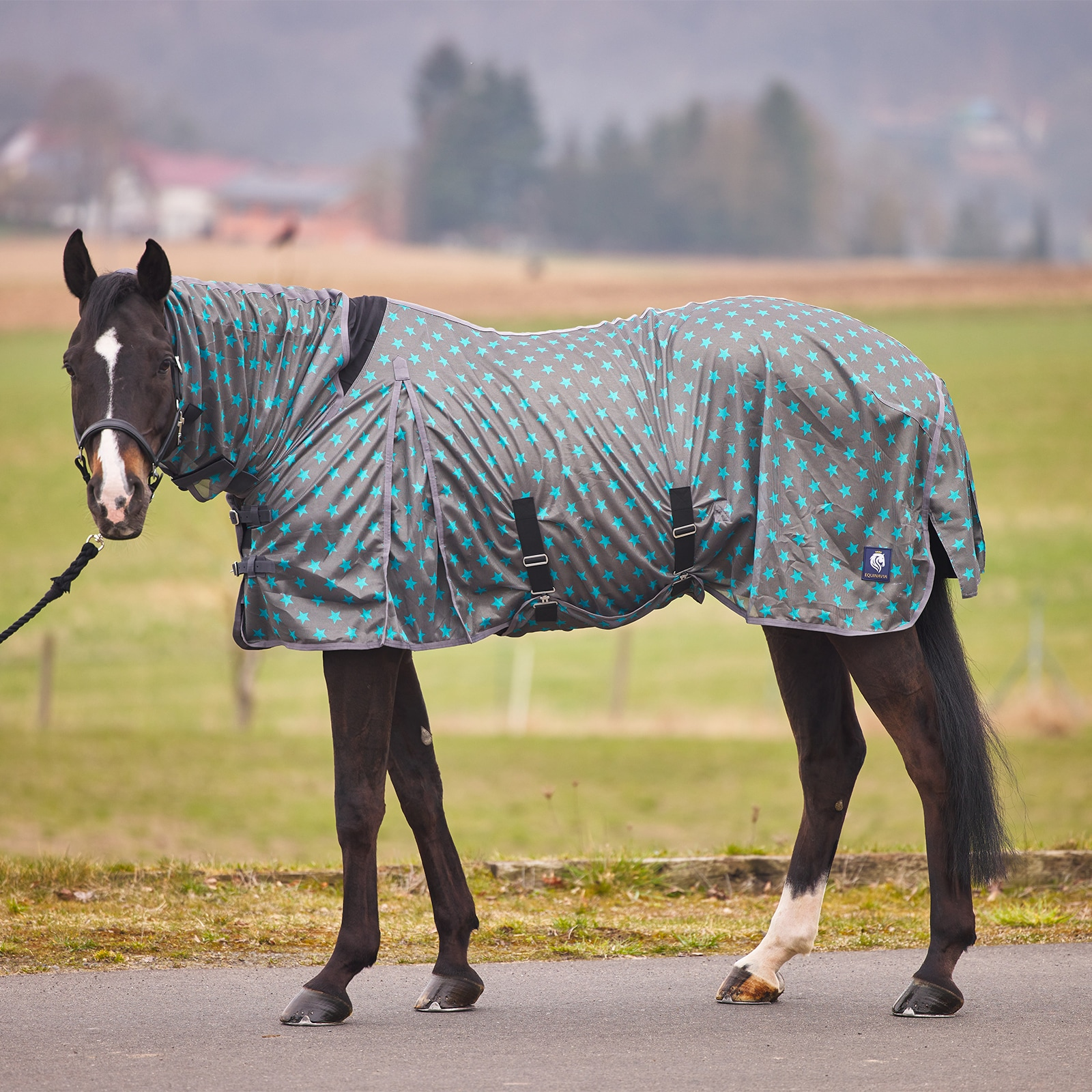 Combo Neck Fly Sheet with Belly Wrap - Grey/Blue Star Print CP2474-G/B/STAR-145
