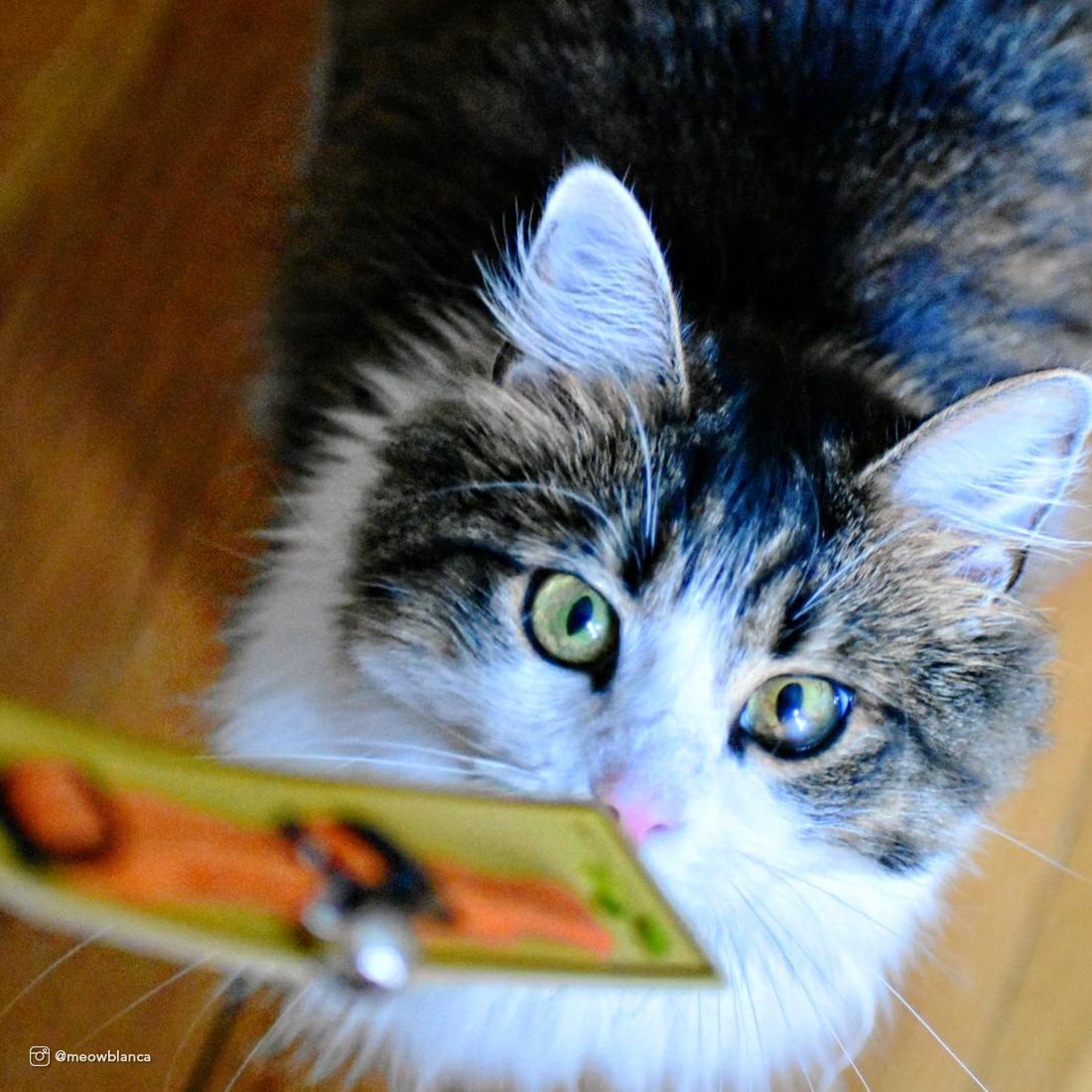 soy_cat2.jpg