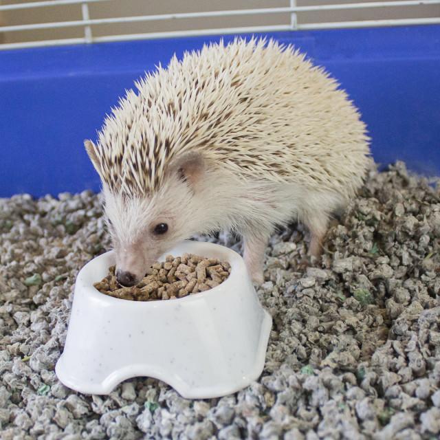 Lifestyle-Image showing Vita Smart Hedgehog