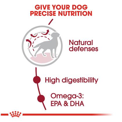 Medium Adult Dry Dog Food
