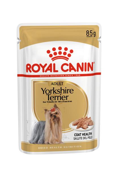 Yorkshire Terrier Adult (in loaf)