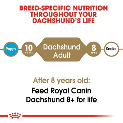 Dachshund Adult Dry Dog Food