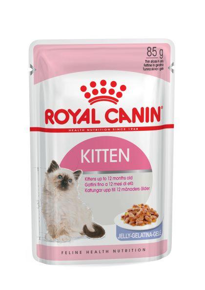 Kitten (in jelly)