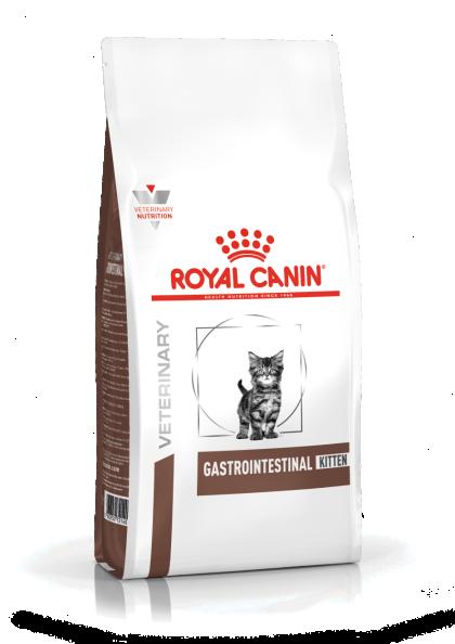 Gastrointestinal Kitten