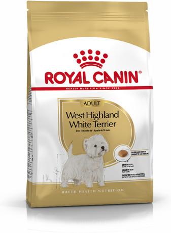 West Highland Terrier Adult