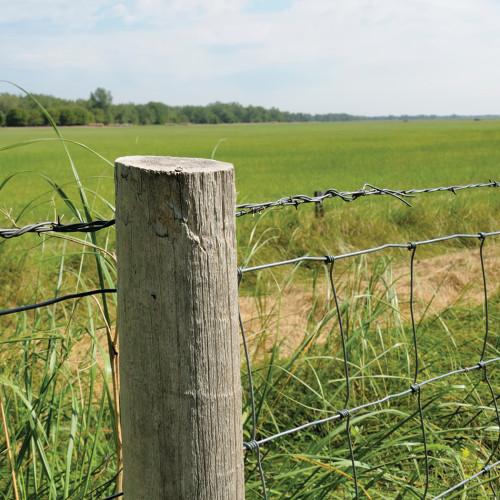 Galvanized Fence Staple - Stockade #6 x 2-1/2