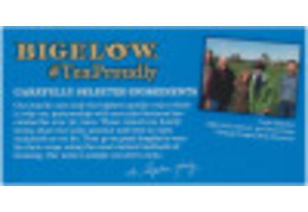 Bigelow Peppermint Herbal Tea bag in foil overwrap
