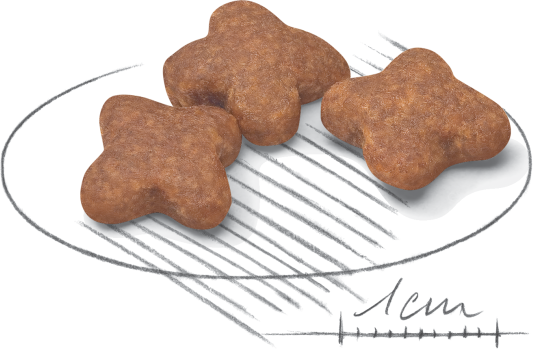 Kibble (not to scale)