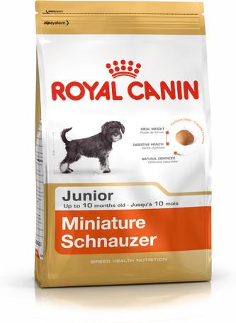 Miniature Schnauzer Junior