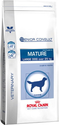 Senior consult mature large dog
