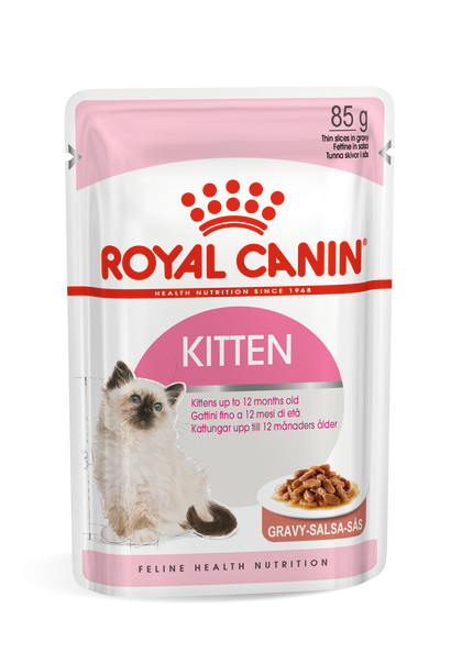 Kitten (in gravy)