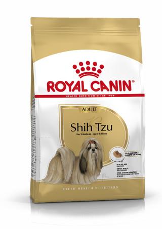 Shih Tzu Adult
