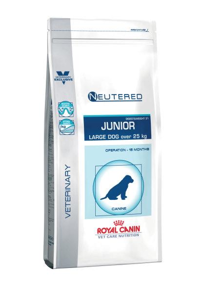 Neutered junior large dog