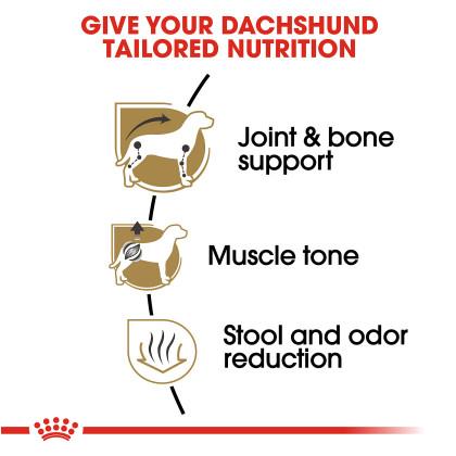 Royal Canin Breed Health Nutrition Dachshund Adult Dry Dog Food