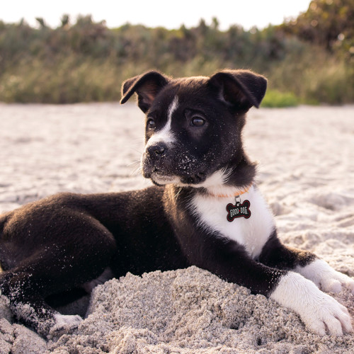 Good Dog Black Small Bone Quick-Tag 25 Pack