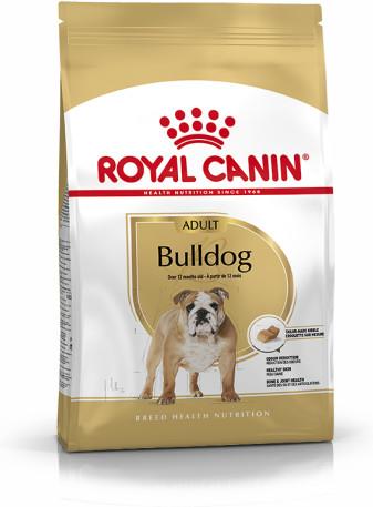 Bulldog Adult