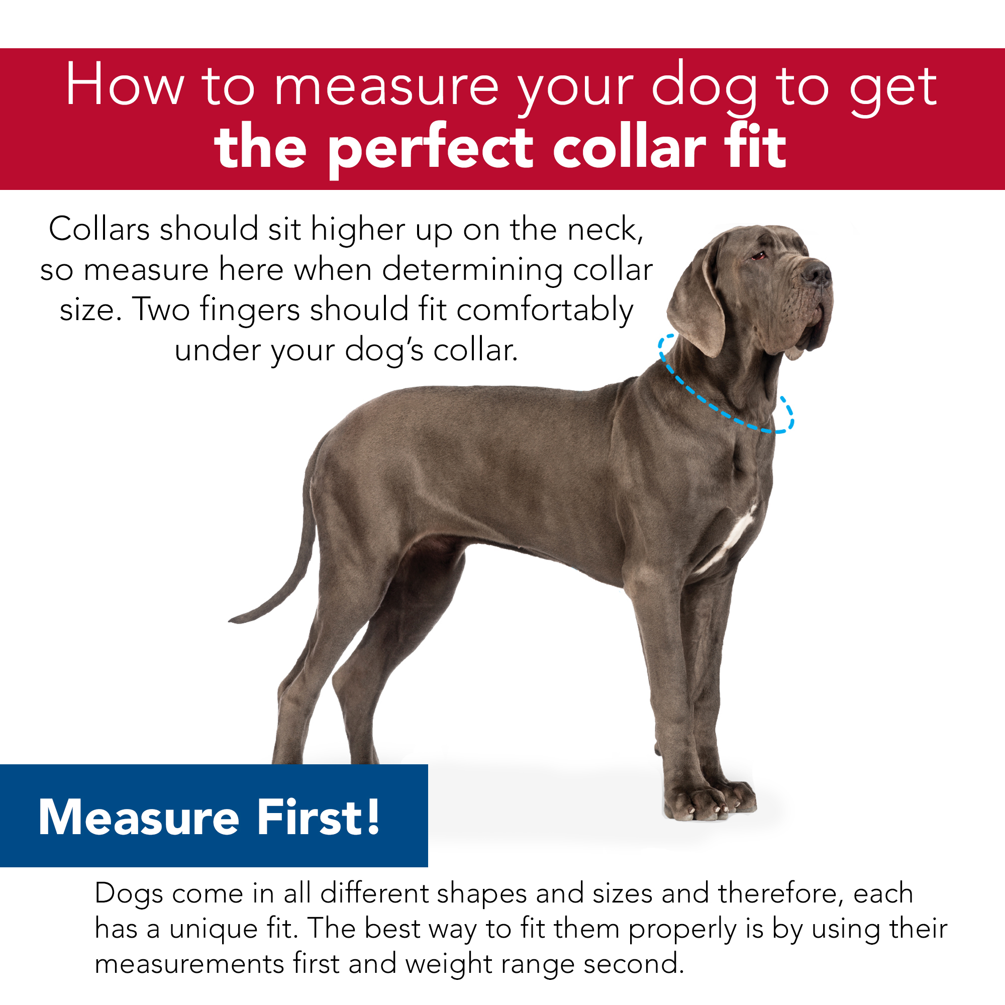 Morris Animal Foundation Styles Adjustable Dog Collar