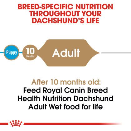Royal Canin Breed Health Nutrition Dachshund Pouch Dog Food