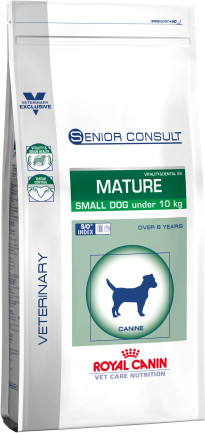 Senior consult mature small dog