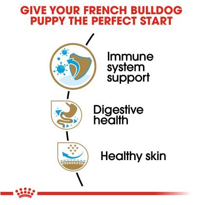 French Bulldog Puppy Dry Dog Food