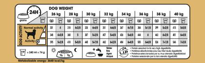 Labrador Retriever Adult feeding guide