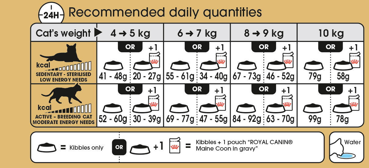 Maine Coon feeding guide