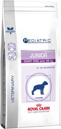 Pediatric junior giant dog