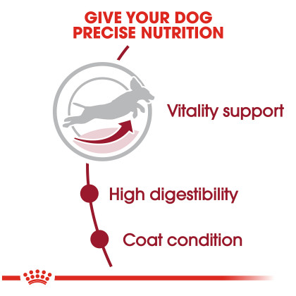 Medium Adult 7+ Dry Dog Food