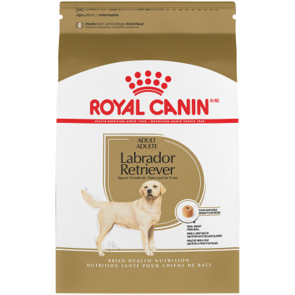 Labrador Retriever Adult Dry Dog Food
