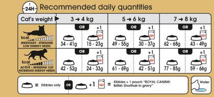 British Shorthair Adult feeding guide